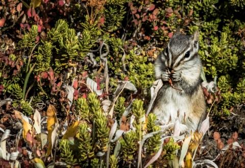 Sunshine Meadows, Banff, Canada