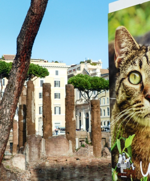Chats, Largo di Torre Argentina, Rome, Italie